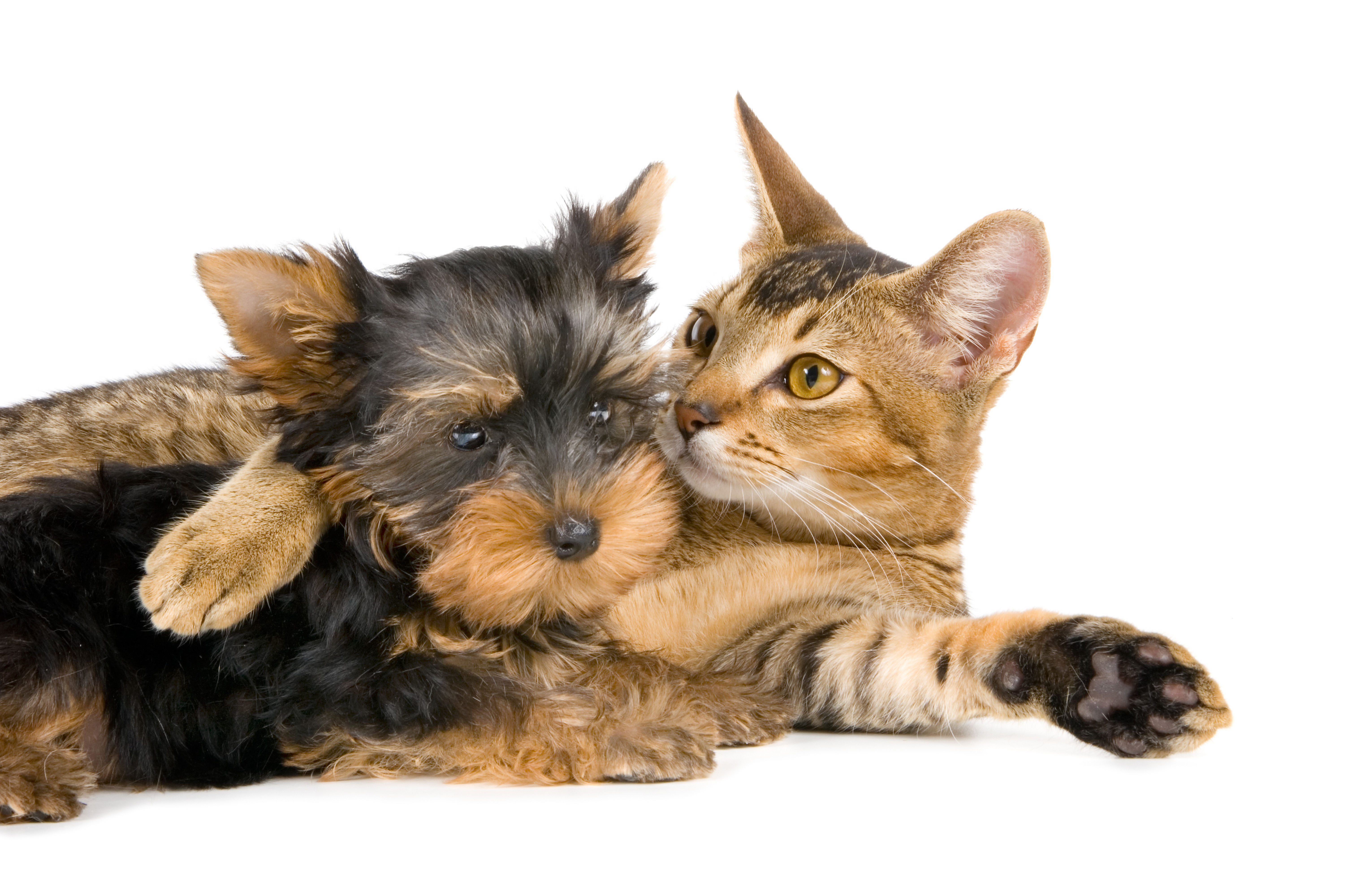 animal_pet_cao_gato
